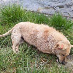 Dopis: Situacija oko trovanja pasa u Jajcu